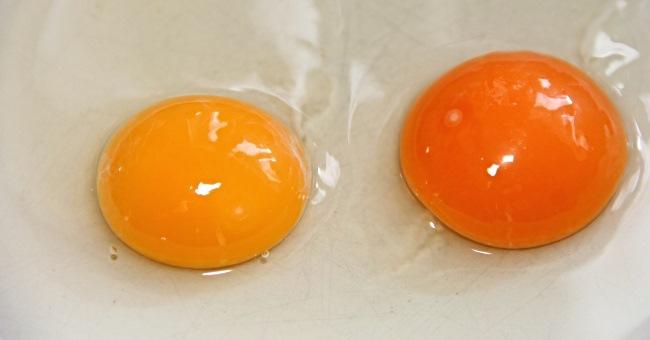Allergia o intolleranza alle uova